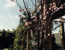 Llega la primavera a nuestros Jardines Más dels Frares